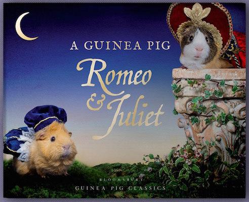 star crossed cavies a pig romeo juliet blarb star crossed cavies a pig romeo juliet
